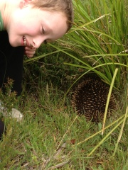 The Unhappy Echidna – A Story About What We Were Made For