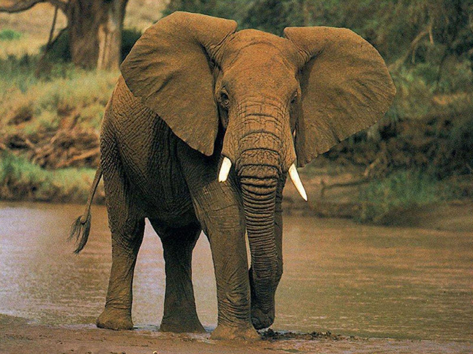 How Do You Eat An Elephant  Better Life Coaching Blog-8797