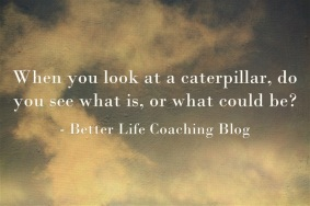 When You Look At a Caterpillar, What Do You See?